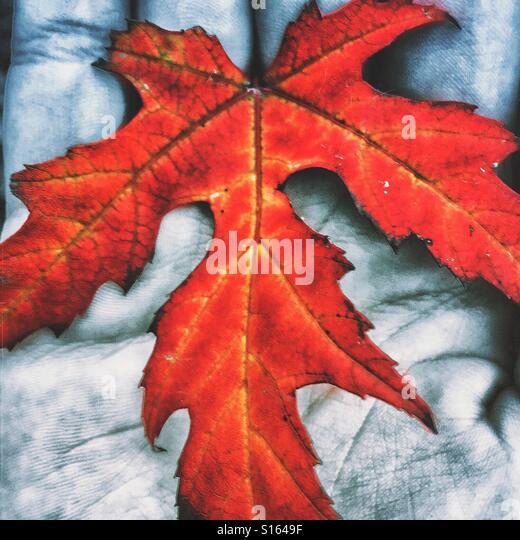 Hand holding an autumn leaf. - Stock-Bilder