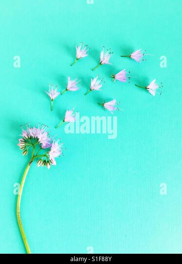 A flower going to pieces. - Stock Image