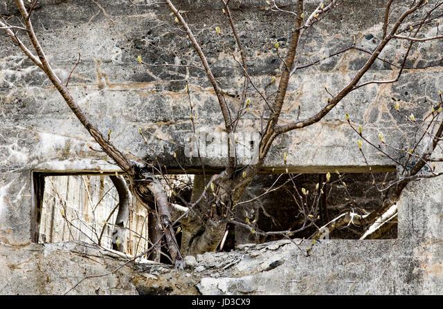 Tree growing through old window of abandoned building - St. John's, Avalon Peninsula, Newfoundland, Canada - Stock Image
