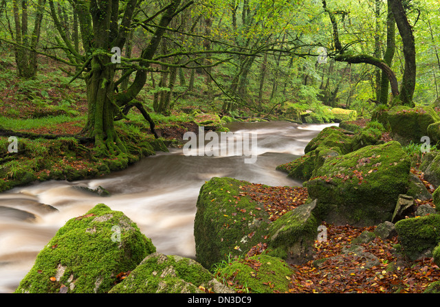 The River Fowey flowing though Draynes Wood at Golitha Falls National Nature Reserve, Cornwall, England. Autumn - Stock Image