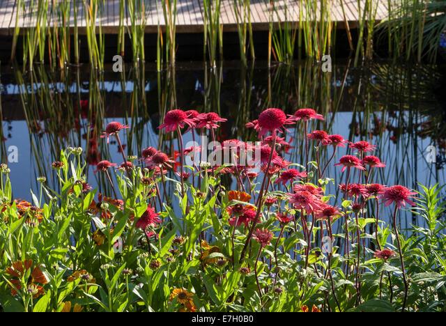 Waltraut stock photos waltraut stock images alamy for Pip probert garden designer