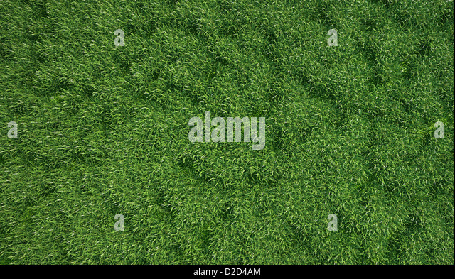 Grass meadow computer artwork - Stock-Bilder