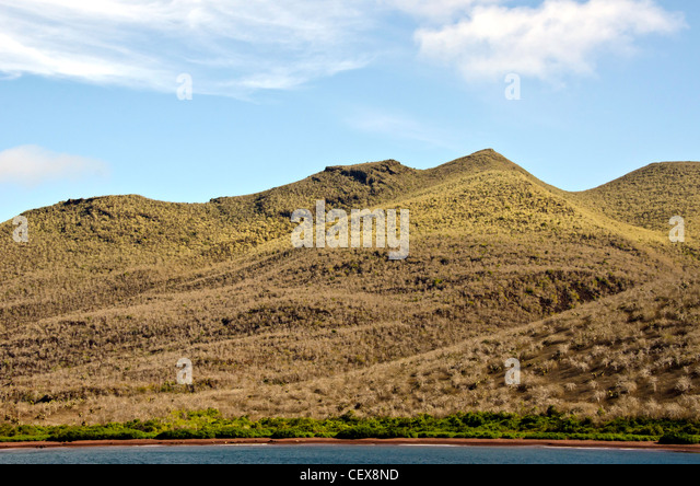 Rabida Island in the Galapagos  the dry season when the palo santo (holy stick) trees are leafless and appear dead, - Stock Image