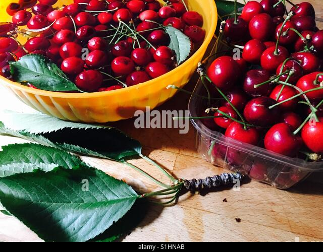 Cherry harvest from Battersea garden in London - Stock Image