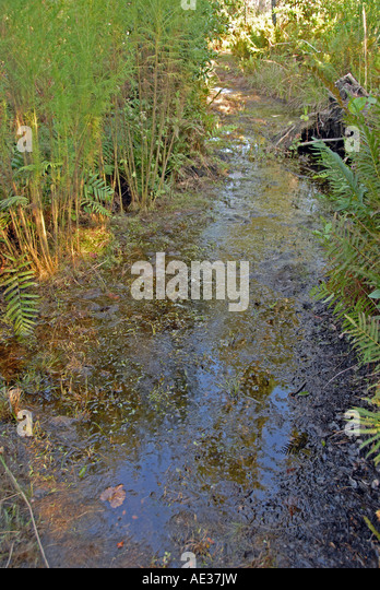 florida Tiger Creek Preseve high water flooded hiking trail - Stock Image