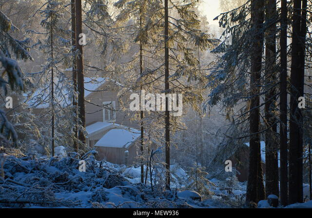 Wooden cottage in a wintry forest on a misty day. - Stock Image