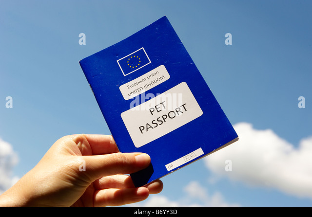 pet passport - Stock Image