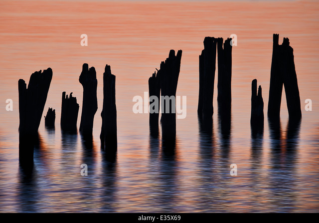 Remnants of dock pilings hold steady in the Great Lake of Lake Huron, Michigan, USA. - Stock Image