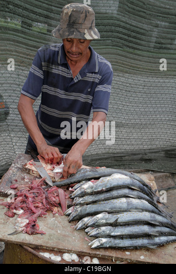 Panama City Panama Ancon Mercado de Mariscos market selling seafood vendor merchant Hispanic Mestizo man fish cleaning - Stock Image