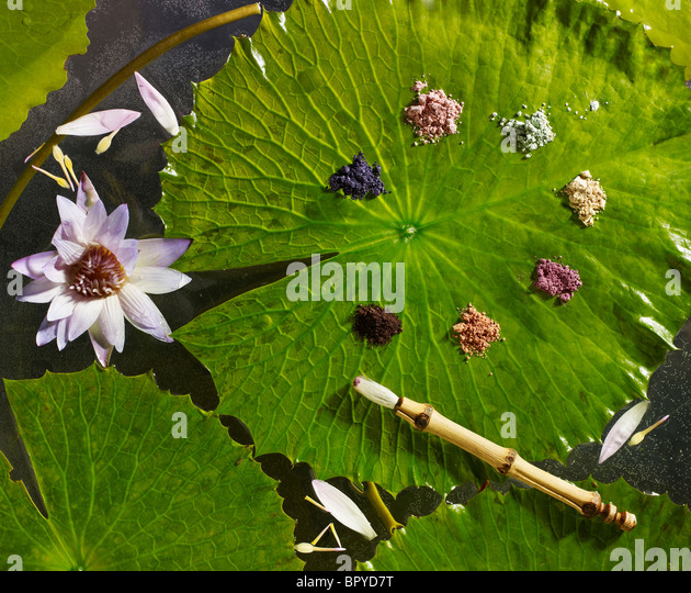 powdered makeup on a lily pad - Stock Image