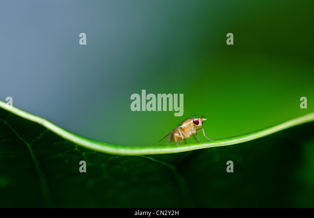 fly in green nature or in the city or on food - Stock Image