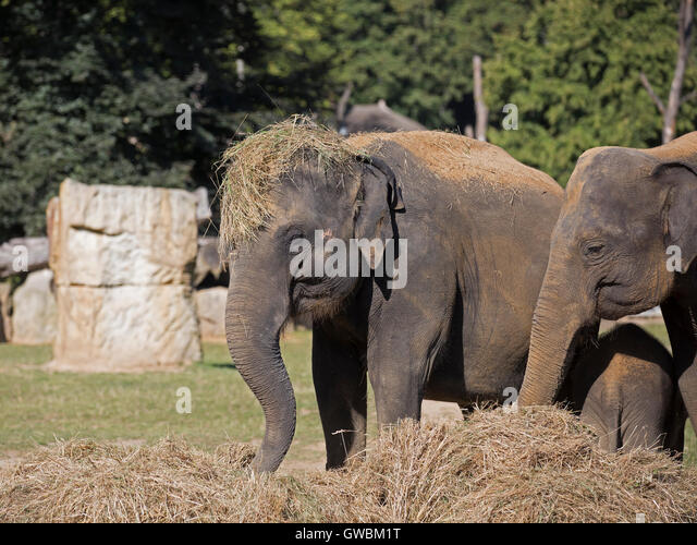 Elephant toes stock photos elephant toes stock images for Designhotel elephant prague 1 czech republic