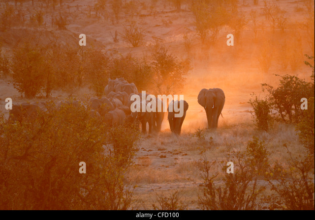 Elephants, Hwange National Park, Zimbabwe, Africa - Stock Image
