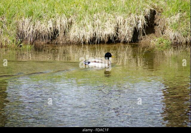 duck river guys Have a rodent-free environment we, at rodent control guys, are providing you our eminent service in rodent removal at your locality in duck river, tn.