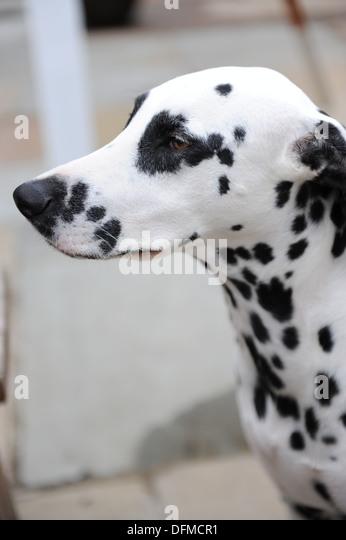Pub Near Spotted Dog Digbeth