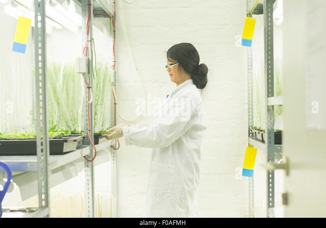 Female scientist choosing plant samples in  greenhouse lab - Stock Image