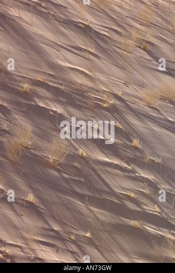 Detail of sand dune and vegetation at Dead Vlei in Namib Desert in early morning light - Stock Image