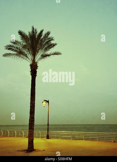 Palm tree by the Mediterranean Sea Beirut Lebanon - Stock Image