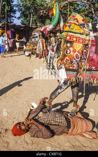 Hippie Flea Market , Flute player with cow at Anjuna Beach , North Goa, India - Stock-Bilder