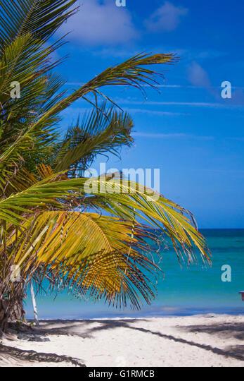 Palm trees and blue sky paradise at bavaro beach in punta cana - Stock Image