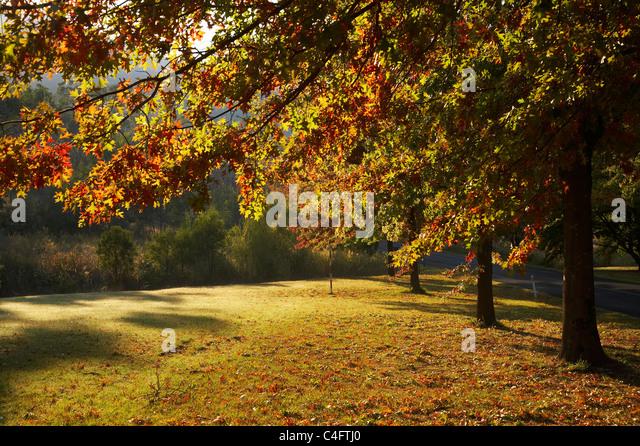 Autumn Trees in Khancoban, Snowy Mountains, New South Wales, Australia - Stock Image