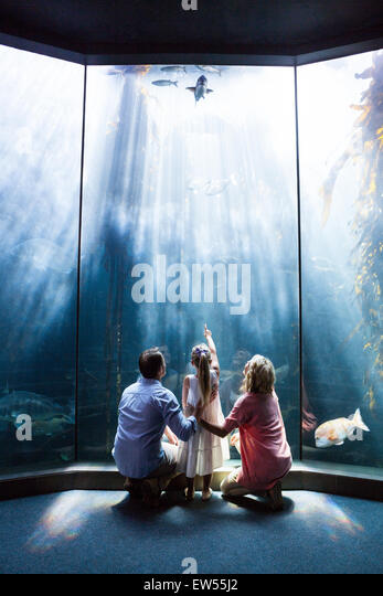 Wear view of family looking at fish tank - Stock-Bilder