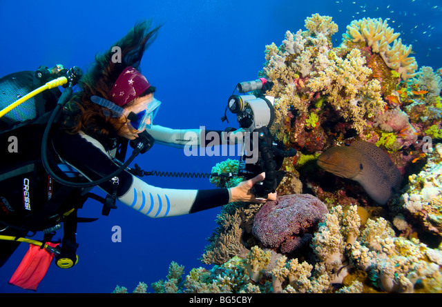 Underwater photographer scuba diving, ras mohammed, Egypt, colorful, moray eel, blue water, tropical reef, scuba, - Stock Image
