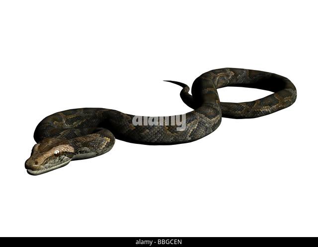 3D Illustration of a python - Stock Image