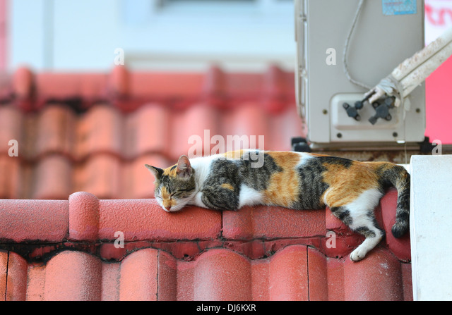 Cat Roof Stock Photos Amp Cat Roof Stock Images Alamy