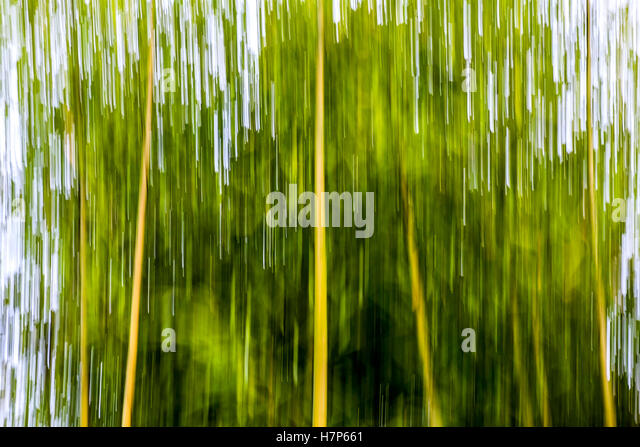Intentional camera movement of bamboo canes - France. - Stock Image