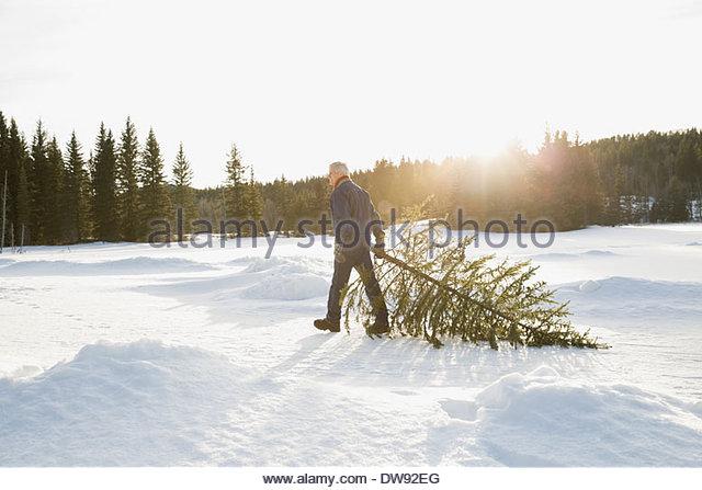 Man dragging Christmas tree in snow - Stock-Bilder