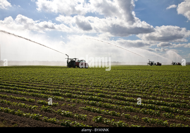 Crops United States Fl Stock Photos Crops United States