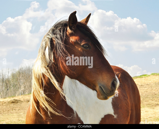Close up shot of pretty horse - Stock Image