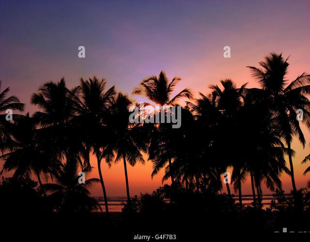 Tropical Dawn - Stock Image