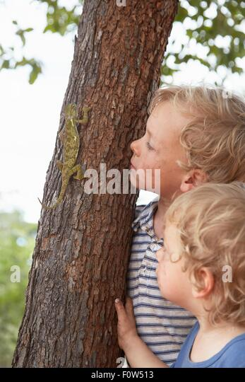 Two young boys watching chameleon climb tree - Stock Image