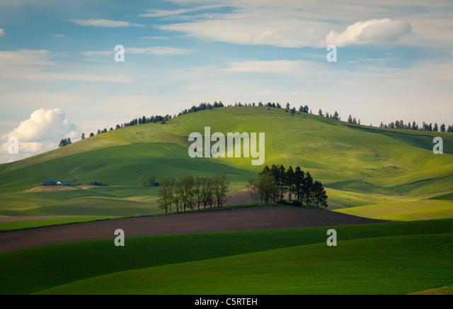 Palouse landscape - Stock Image