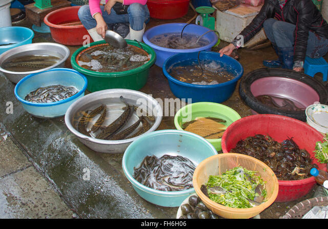 Live market stock photos live market stock images alamy for Outdoor fish for sale