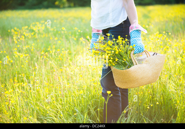Cropped mid-section holding basket of flowers - Stock Image