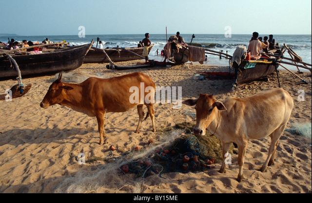 Beach of  Baga (Goa), Indien - Stock-Bilder