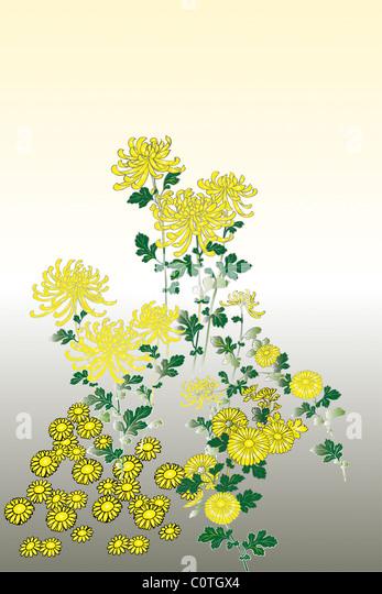 CG of Japanese Painting, Chrysanthemum - Stock Image