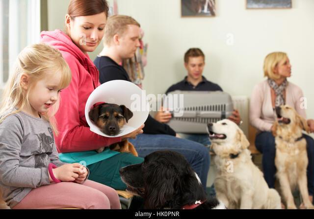 Pet Adoption Warragul For Dogs