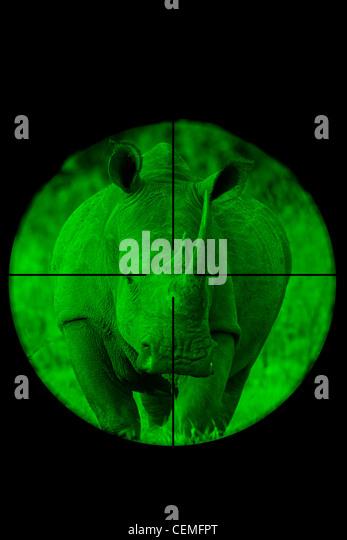 White Rhinoceros seen through a hunting rifle sight (illustration). - Stock-Bilder