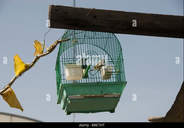 Shoka village near Rafah Birdcage with goldfinch - Stock Image