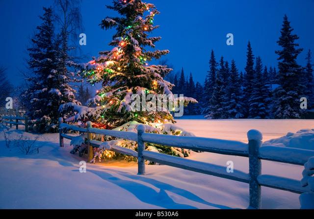 Decorated Christmas Tree Night Stock Photos & Decorated ...