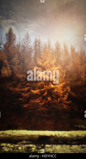 sunset in forest - Stock Image