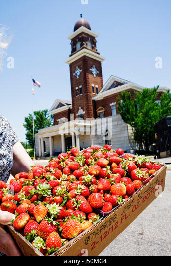Alabama Greenville Commerce Street Butler County Courthouse Federal style historic strawberries case - Stock Image