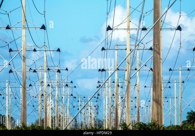 Miami Florida utility poles Florida Power & Light FPL from Turkey Point Nuclear Generating Station - Stock Image