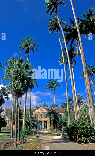 Barbados Codrington College national landmark palm trees - Stock Image
