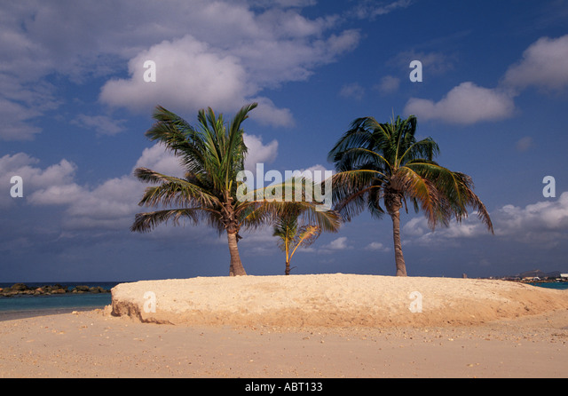 Deserted Tropical Island with Palm Trees - Stock Image