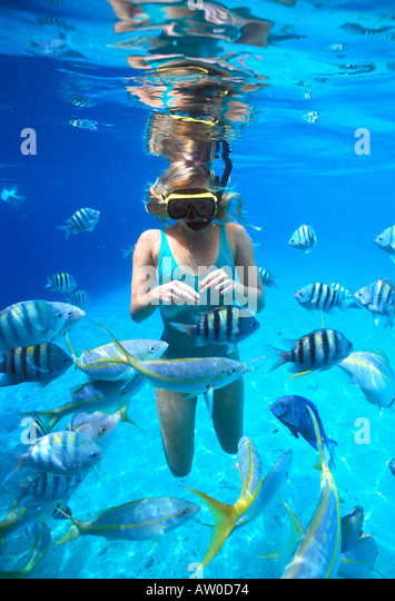 Bonaire Netherlands Antilles Woman snorkeler feeding fish underwater in clear water - Stock Image